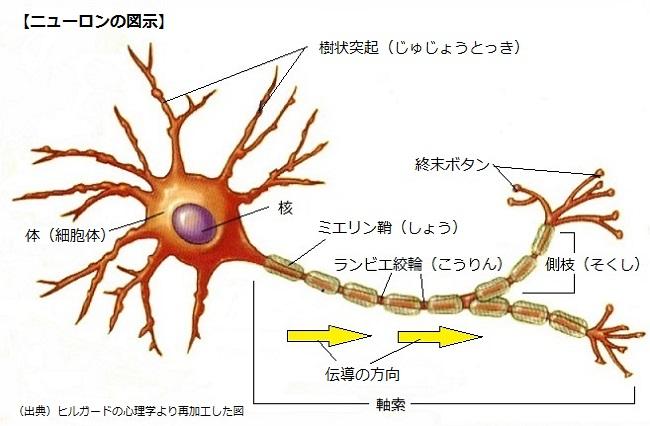 01ニューロンの図示